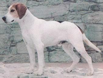 Породы собак с фотографиями украина