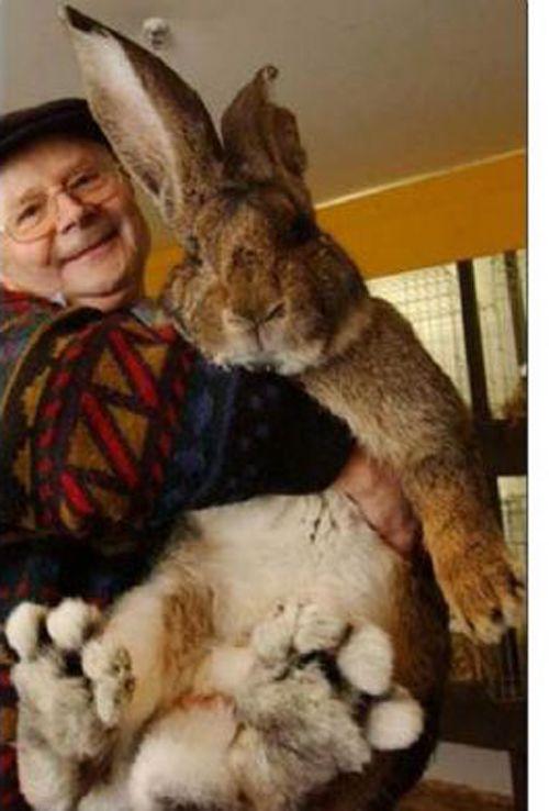 Большие кролики фото 3