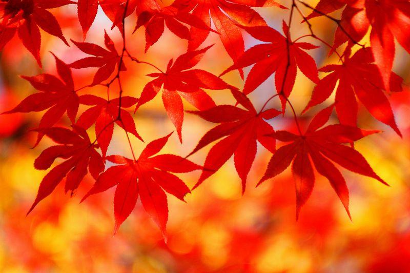http://www.imgs.su/tmp/2012-10-24/1351027126-461.jpg